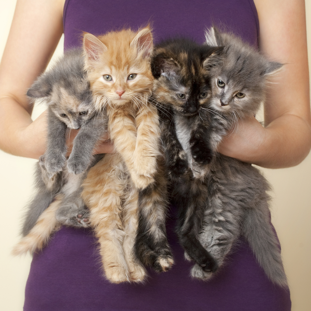 National Kitten Day is July 10! Here's Where To Get a Furry Friend